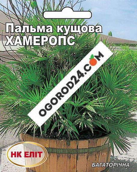 Пальма кустовая Хамеропс