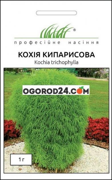 Семена Кохия кипарисова