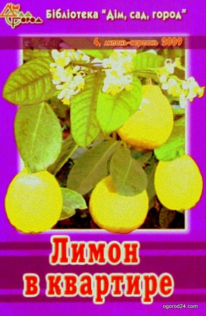 Лимон в квартире